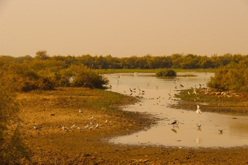 National Park in Mauritania