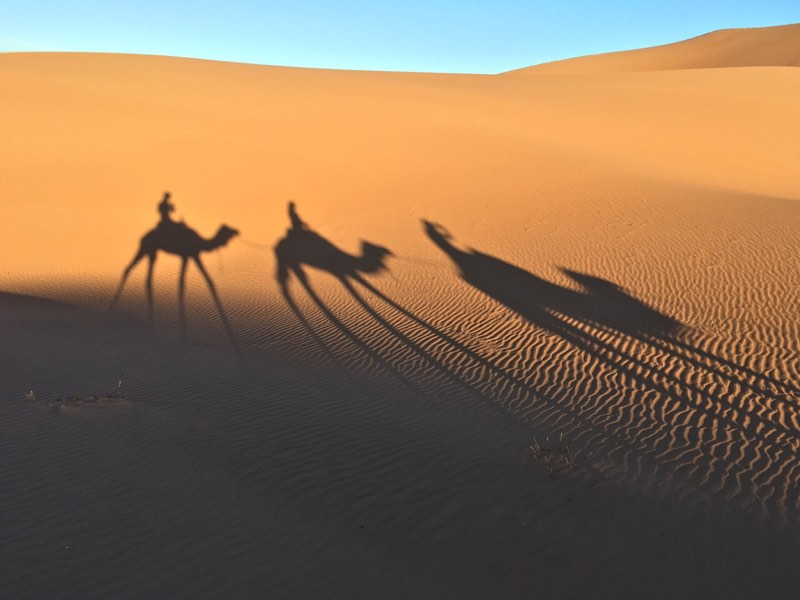 camel ride - overlanders on camels