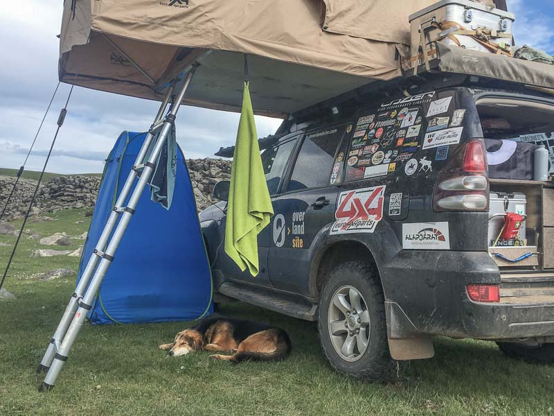dog in mongolia overlanding